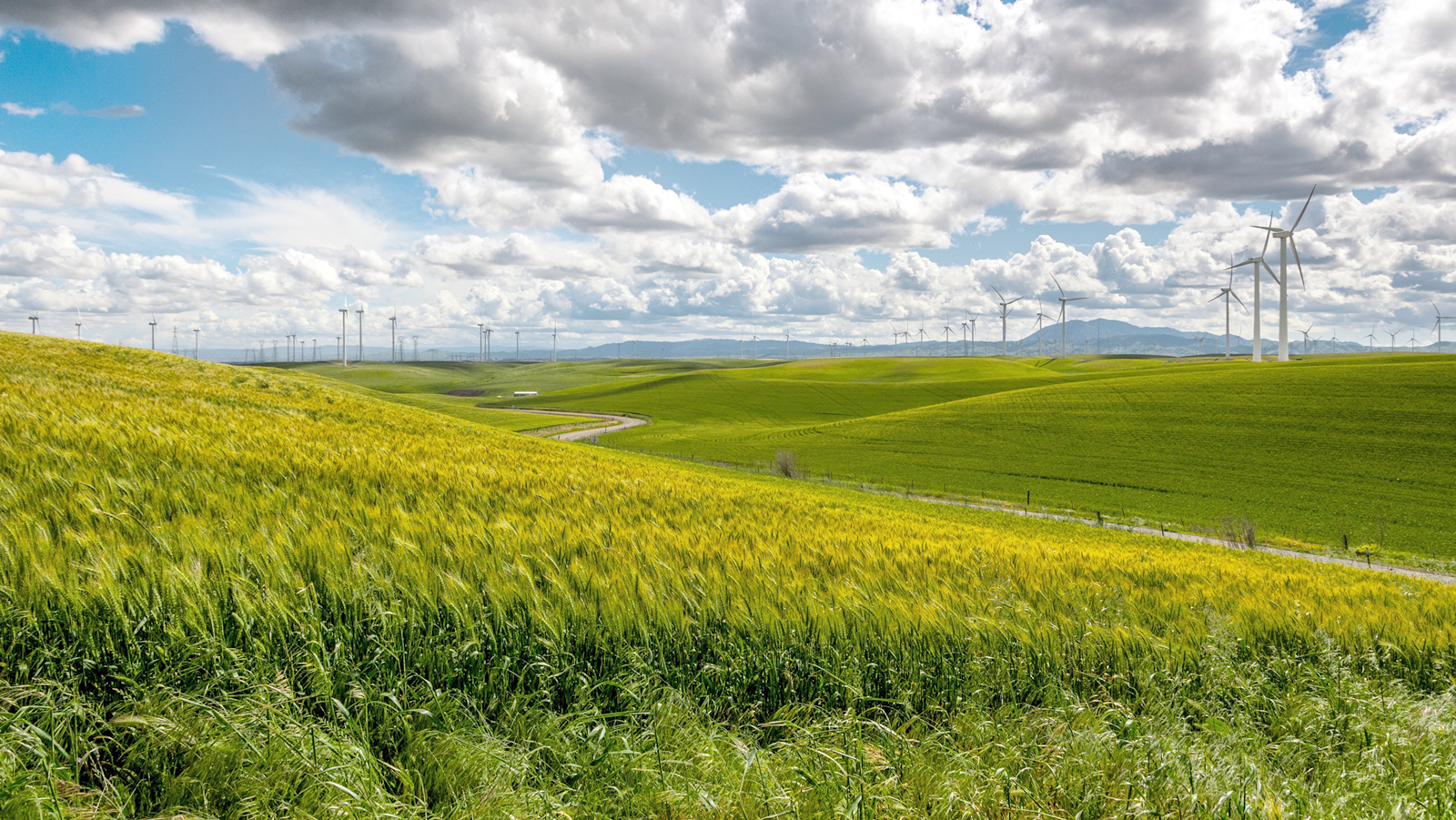 Going Green With Your Own Energy Resources